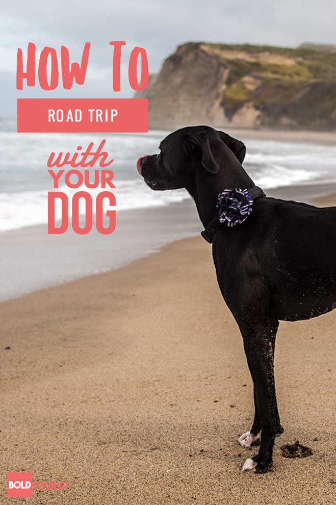How to take your dog on a road trip!