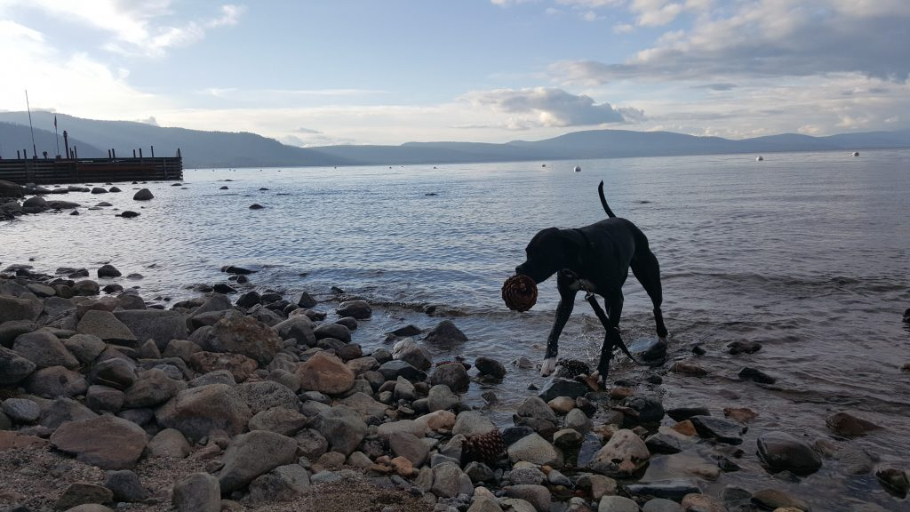 Dogs in North Lake Tahoe