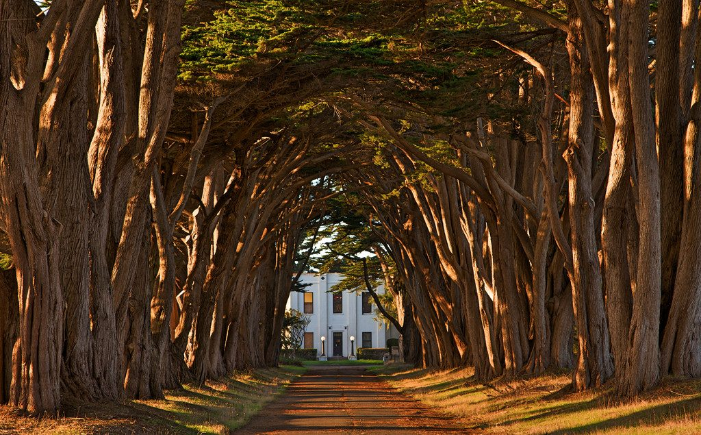 Cypress Tree Tunnel Point Reyes