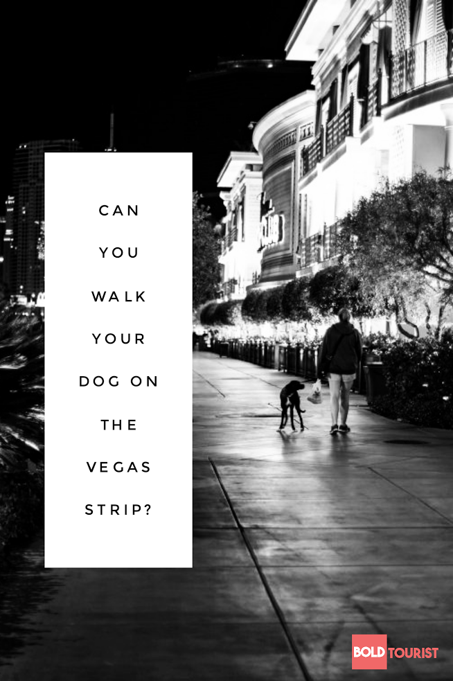 Can you walk your dog down the Vegas Strip? We did!
